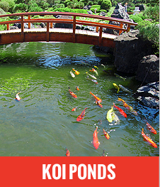 Welcome to quickfix services for Koi pond builders cape town